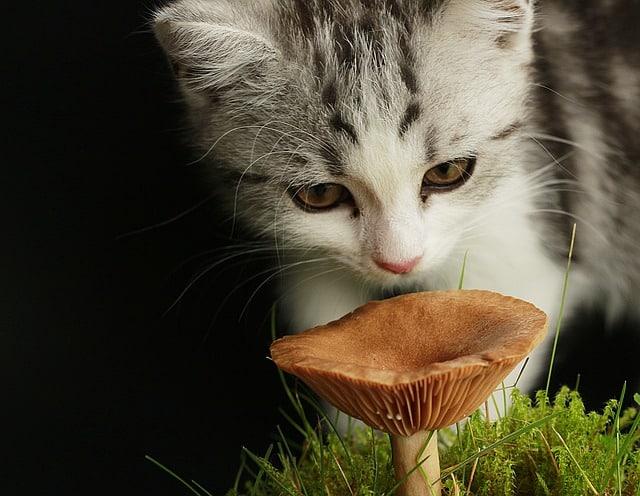 gato comiendo seta