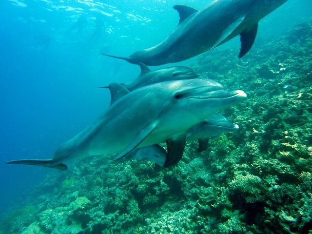 que come un delfin