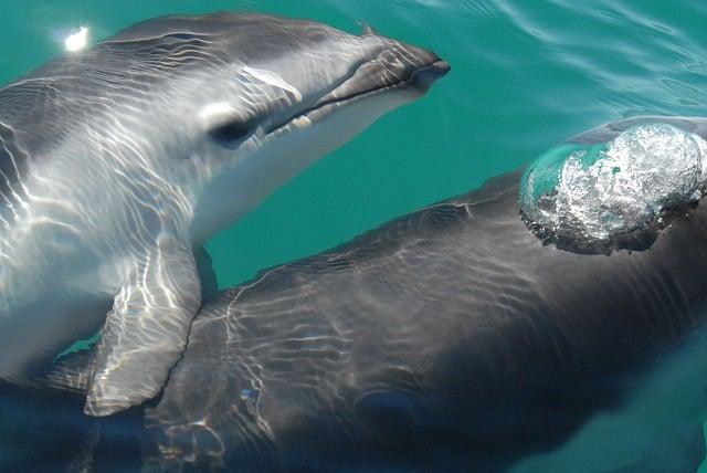 delfin oscuro
