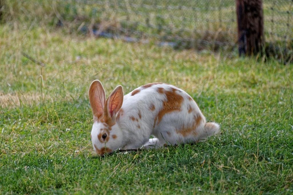 que comen los conejos mascota