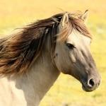 que come un caballo