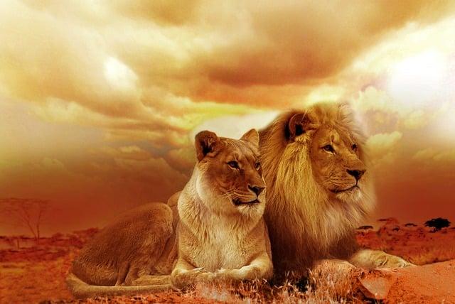 que comen los leones