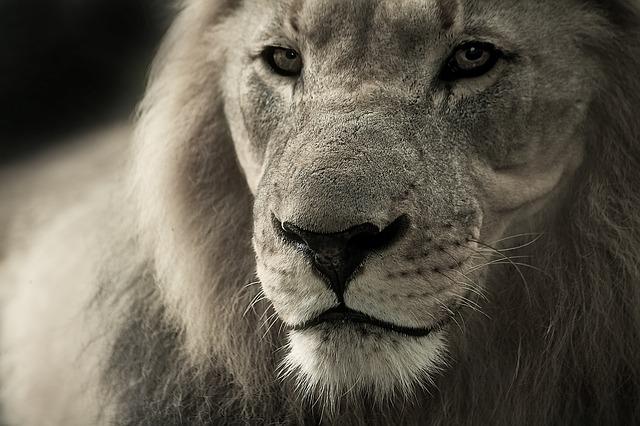 que come un leon