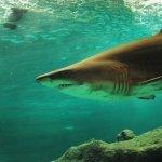 que come un tiburon