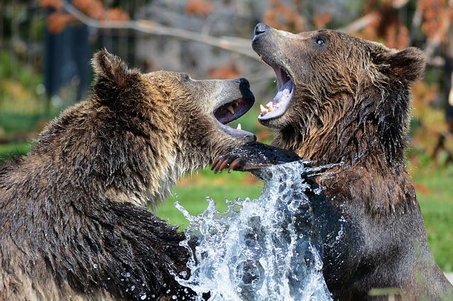 que come un oso pardo