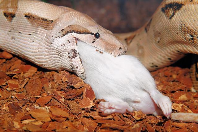 Que comen las serpientes