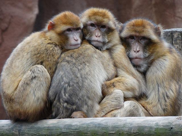 que come un mono