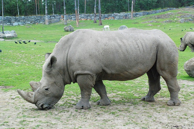 que come un hipopotamo