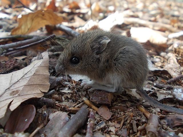 que comen un raton mascota