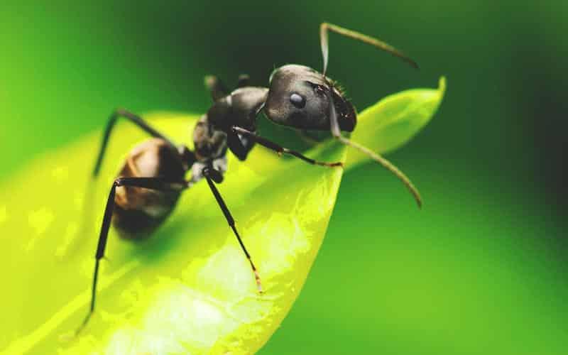 Que comen los insectos