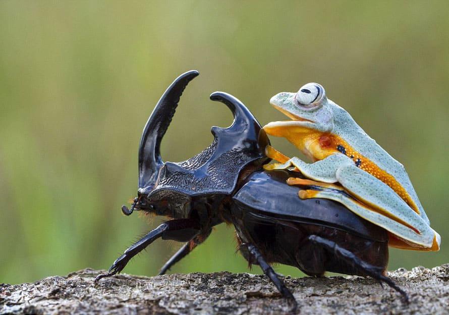 Que comen los escarabajos