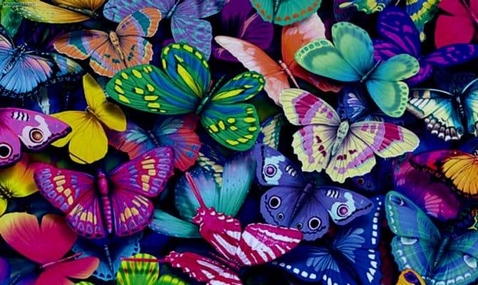Que comen las mariposas
