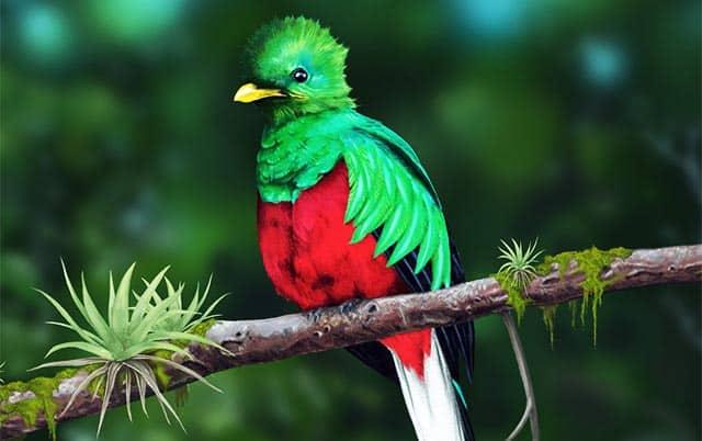 Que comen los quetzales
