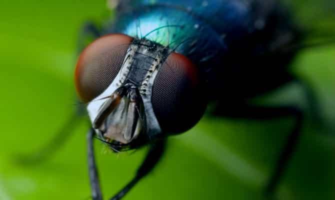 Que comen las moscas 2
