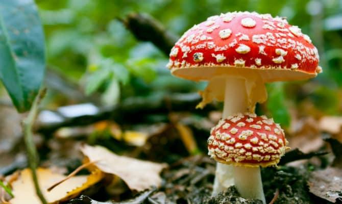 Que comen los hongos
