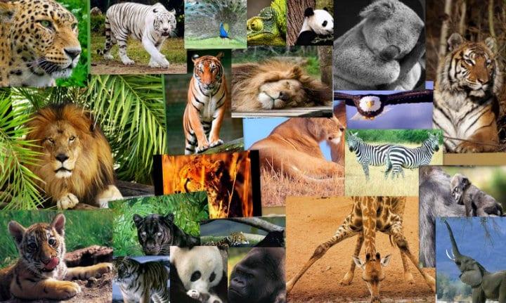 ¿Cuáles son las mejores enciclopedias de animales?