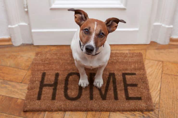 Pasos a seguir al llevar un perro al hogar