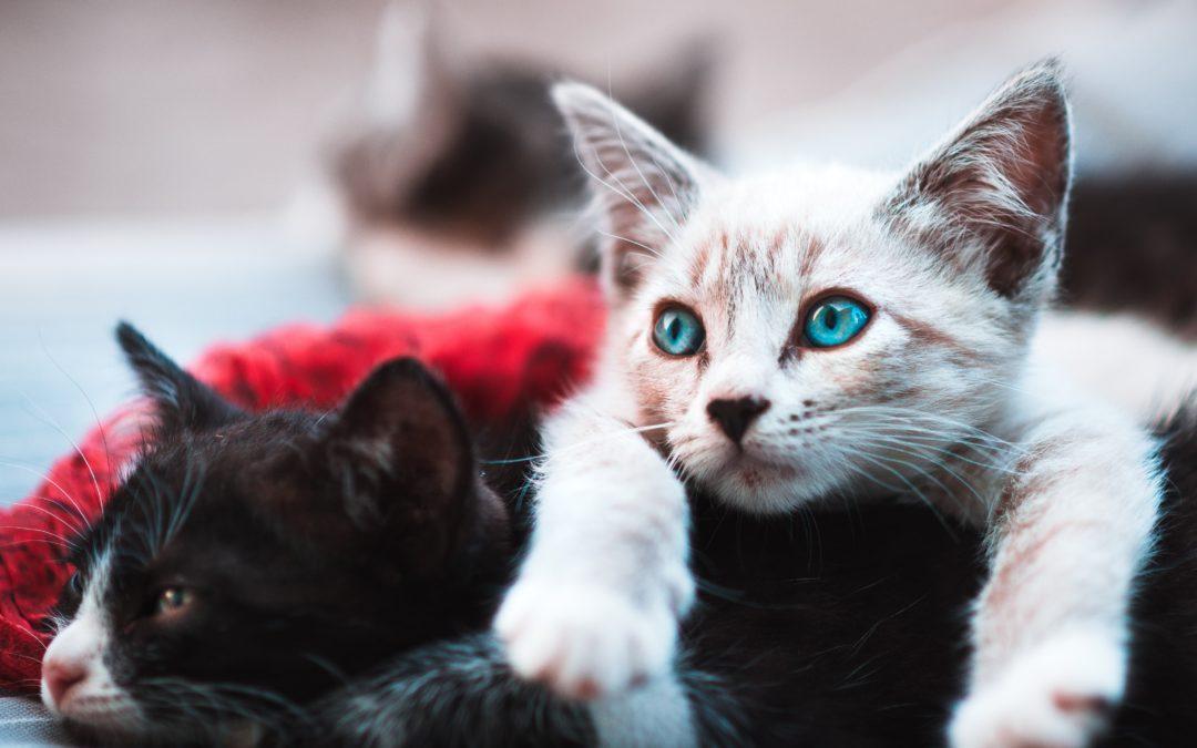 Cómo desparasitar gatos