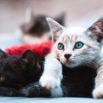 desparasitar a gatos