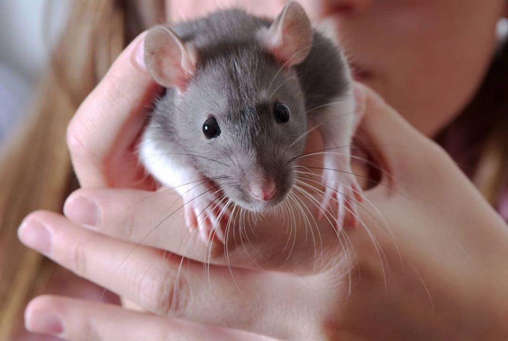 sosteniendo con la mano una rata